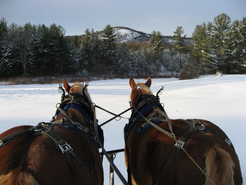 sleigh rides freedom nh purity springs burnt meadow stables horse back riding